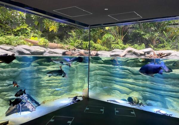 カワスイ川崎水族館